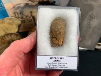 Large Coprolite (dung), Bull Canyon Fm. #03