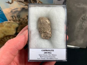 Large Coprolite (dung), Bull Canyon Fm. #04