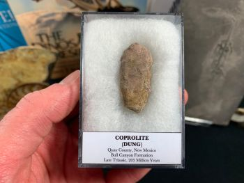 Large Coprolite (dung), Bull Canyon Fm. #05