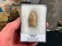 Large Coprolite (dung), Bull Canyon Fm. #06