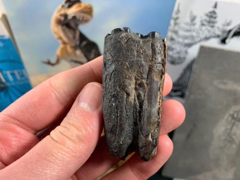 Horse Tooth, Florida #10