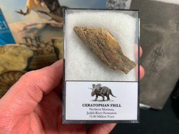 Ceratopsian Frill (Judith River Fm.) #10