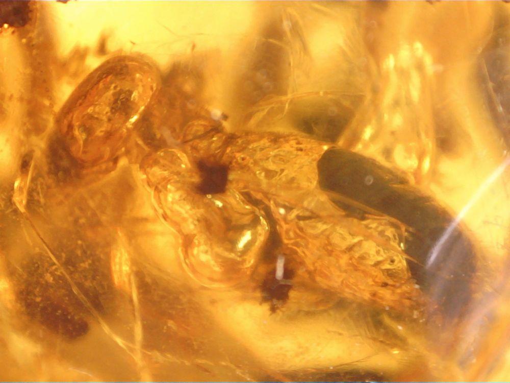 Dominican Amber Inclusion #51 (Termite & Methan Bubbles)