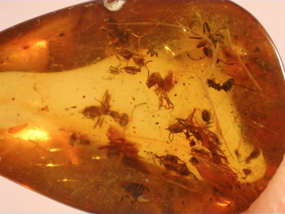 Dominican Amber Inclusion #63 (Ants)