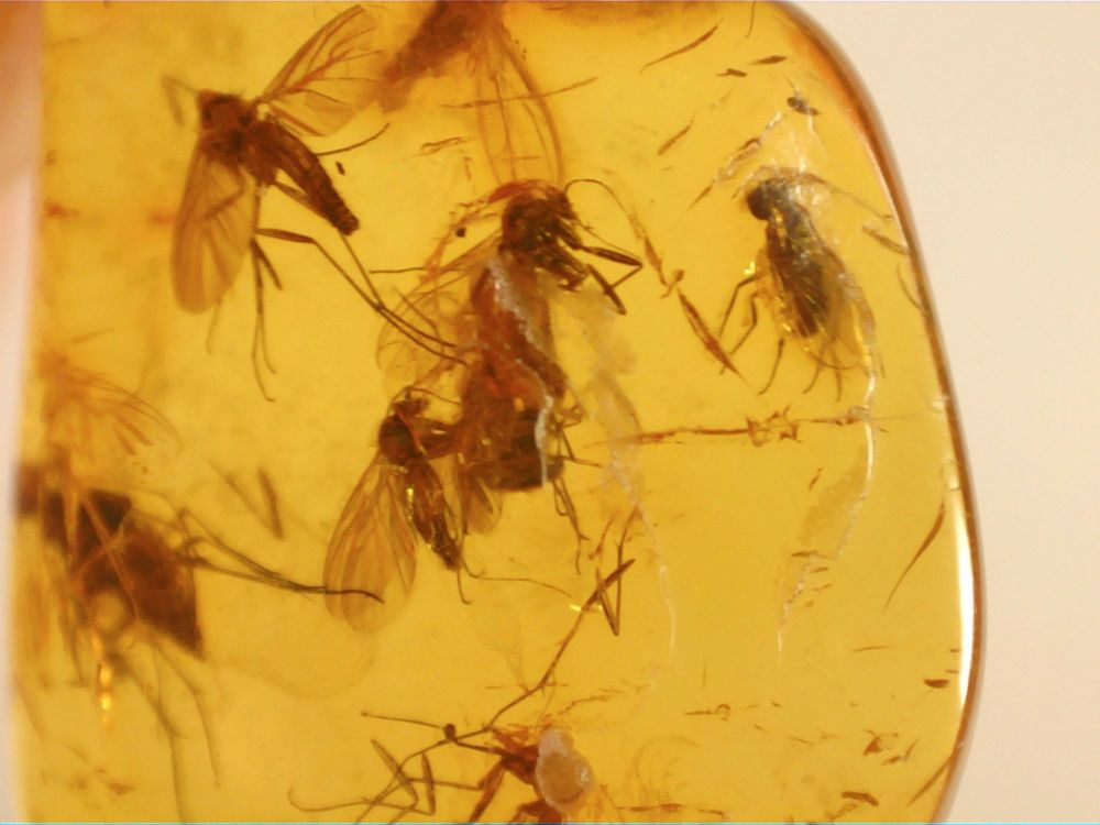 Dominican Amber Inclusion #82 (Winged Insects)