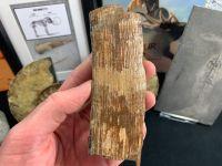 Mammoth Tusk #18