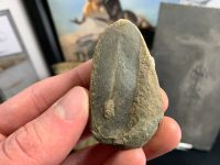 Fossil Fern (Macroneuropteris), Mazon Creek #MC30