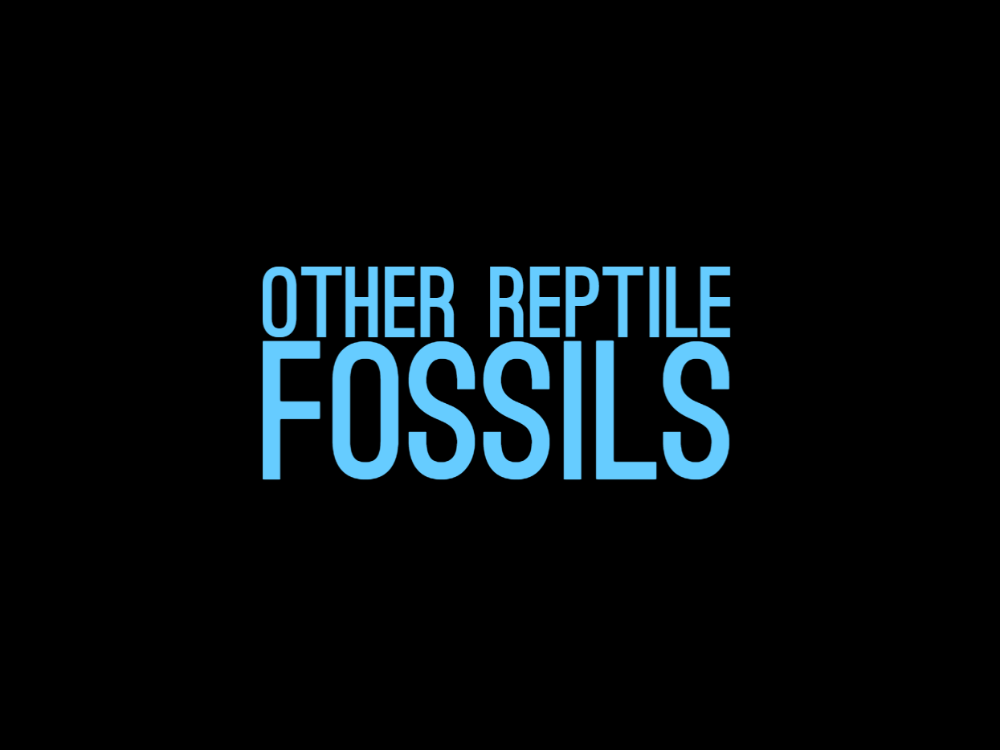 Other Reptile Fossils