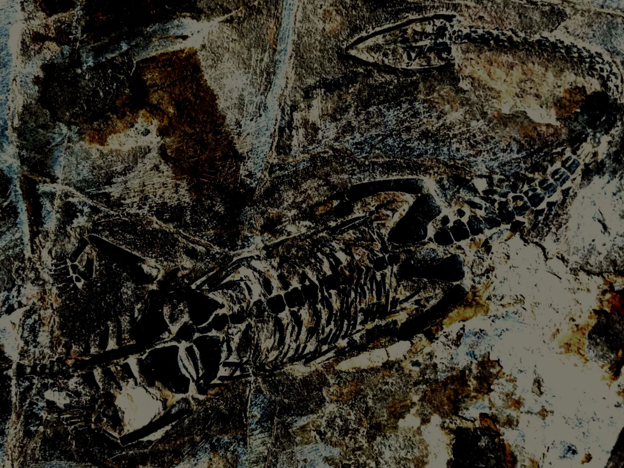 See all reptile and pterosaur fossils we have for sale.
