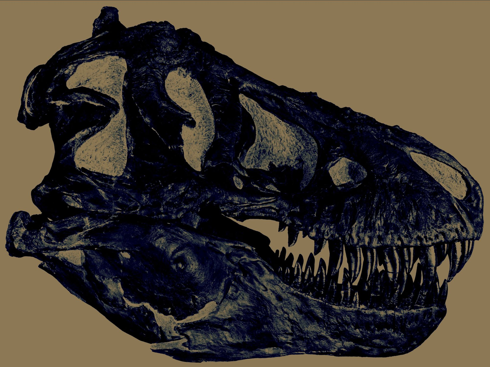 See all categories of dinosaur fossils for sale.