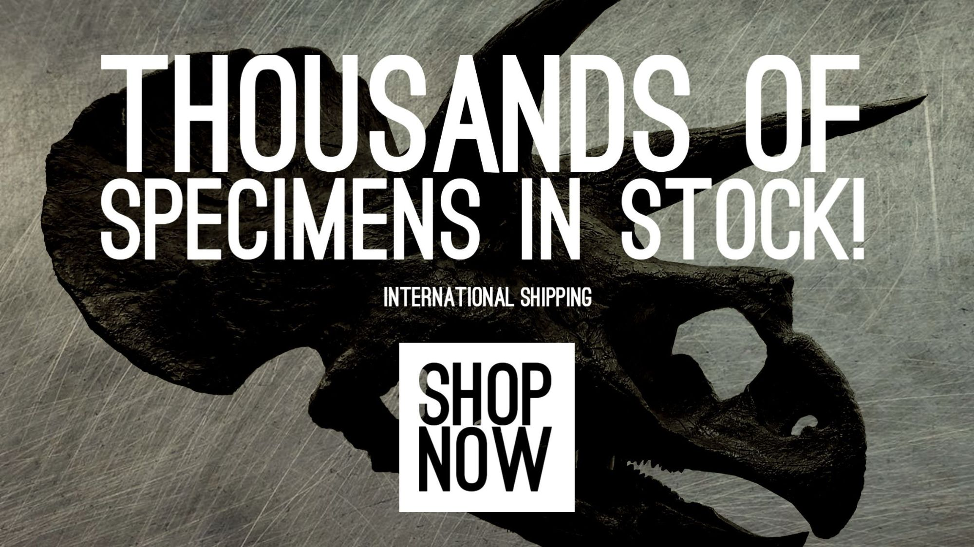 Shop all categories of fossils for sale