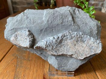 Ichthyosaur Bones, Germany