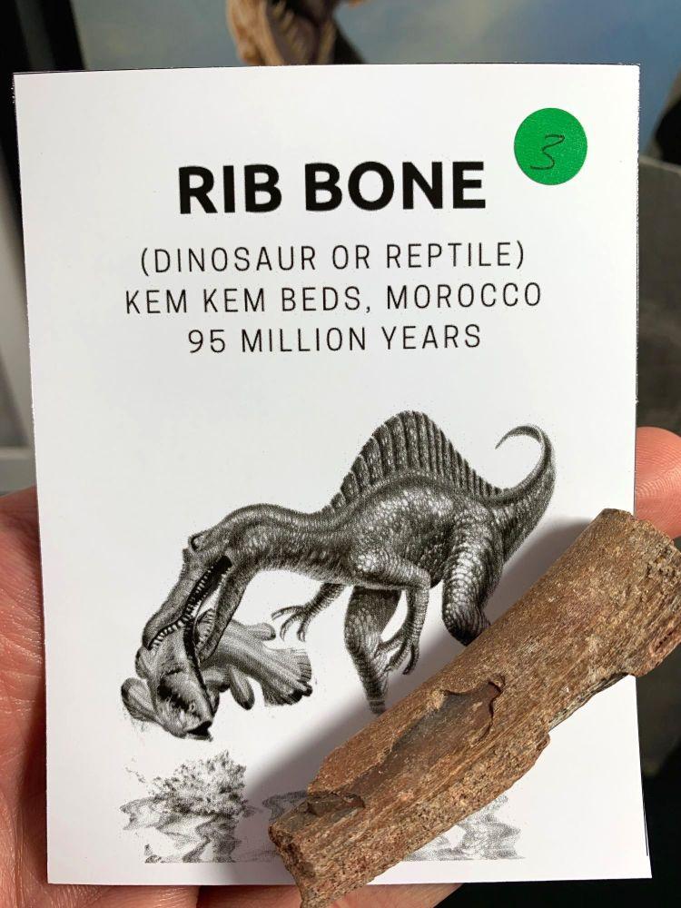 Dinosaur or Reptile Rib Bone (Kem Kem) #03