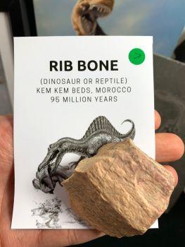 Dinosaur or Reptile Rib Bone (Kem Kem) #07