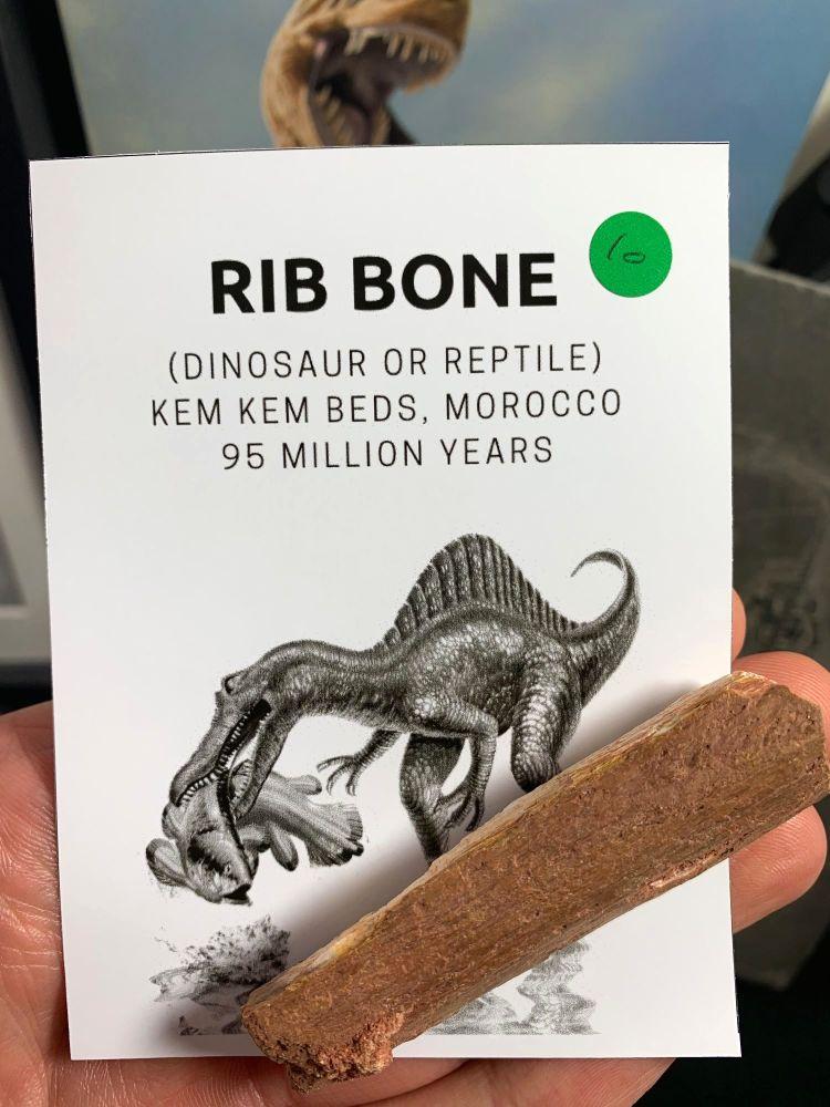 Dinosaur or Reptile Rib Bone (Kem Kem) #10