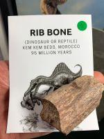 Dinosaur or Reptile Rib Bone (Kem Kem) #11