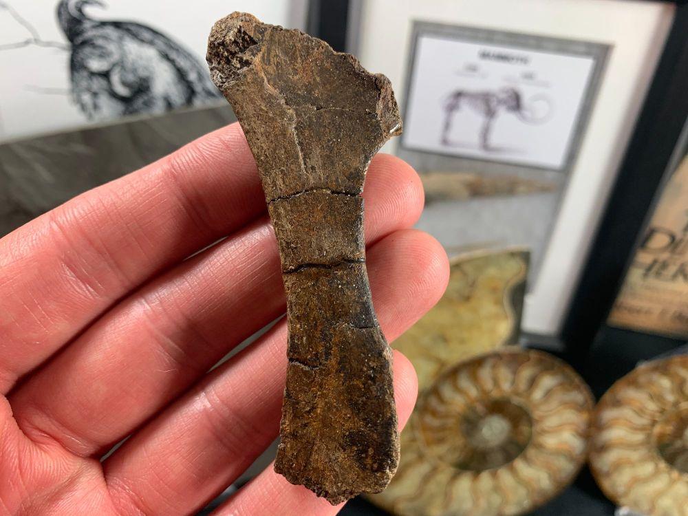 Reptile Bone (Hell Creek) #01
