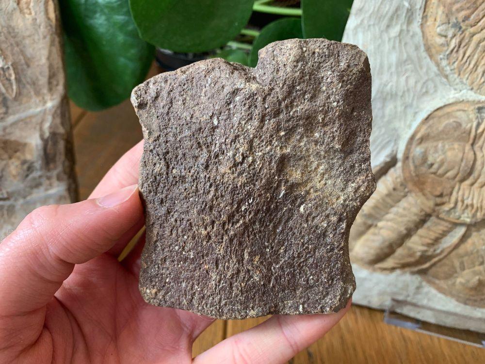 Ichthyosaur Shoulder Bone (Dorset, UK) #05