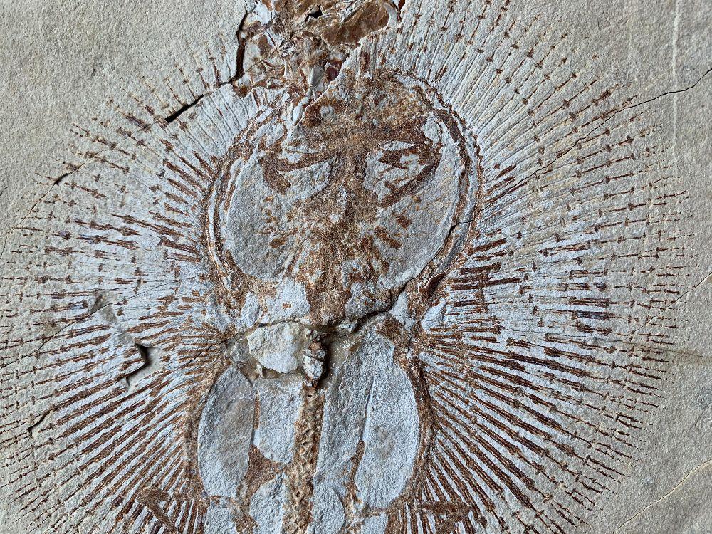 Lebanon - Fossil Fish