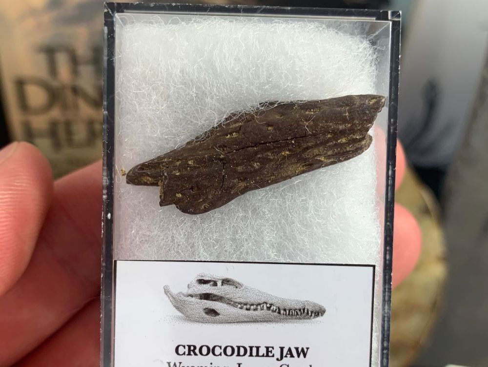 Crocodile Jaw (Lance Creek) #07