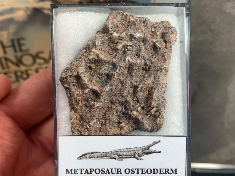 Metaposaur Osteoderm (Triassic Amphibian) #03