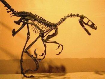 Saurornitholestes (Dromaeosaur)