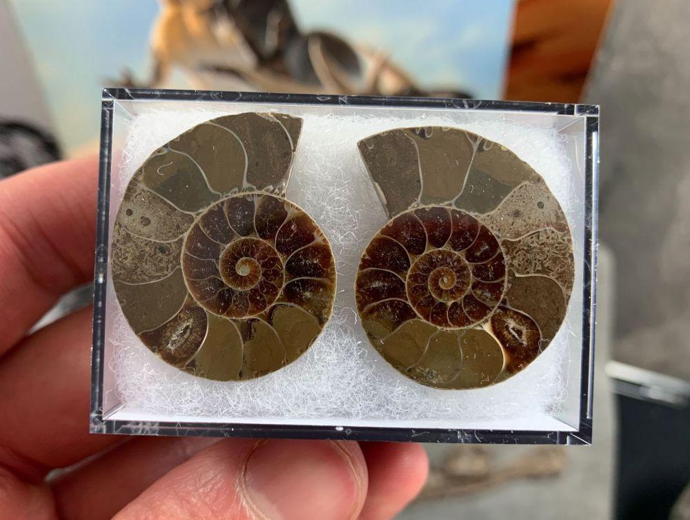 Cut & Polished Ammonite (pair) #03
