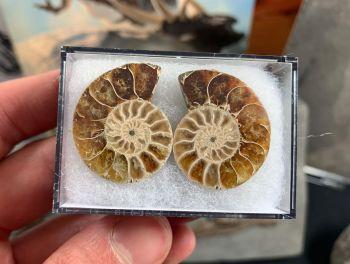 Cut & Polished Ammonite (pair) #06