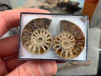Cut & Polished Ammonite (pair) #08