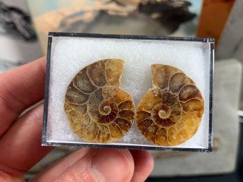Cut & Polished Ammonite (pair) #09