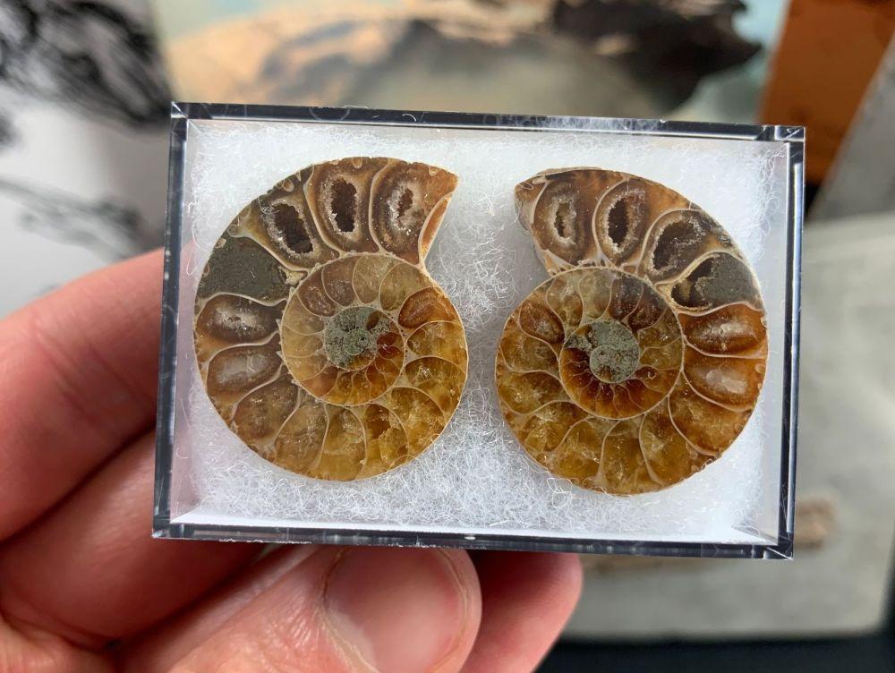 Cut & Polished Ammonite (pair) #10