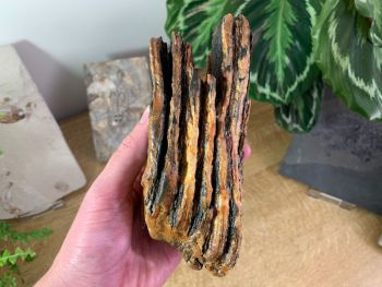 Woolly Mammoth Tooth #01
