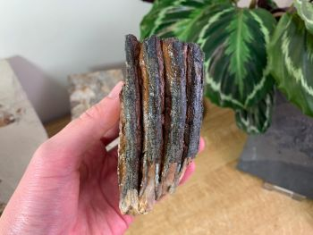 Woolly Mammoth Tooth #03