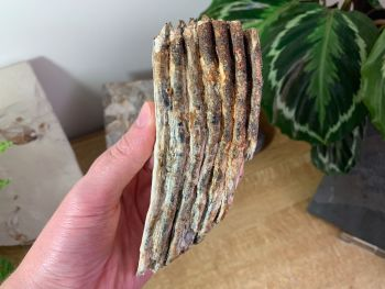 Woolly Mammoth Tooth #05
