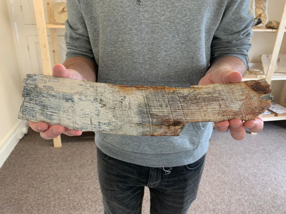 Large Woolly Mammoth Tusk (14 inches) #06