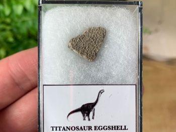 Titanosaur Sauropod Eggshell, France #03