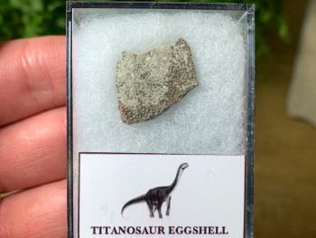 Titanosaur Sauropod Eggshell, France #04