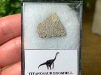 Titanosaur Sauropod Eggshell, France #05