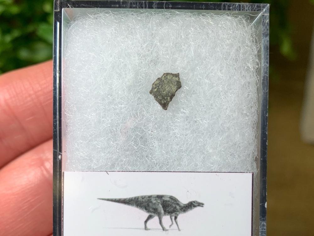 Maiasaura Hadrosaur Eggshell #02
