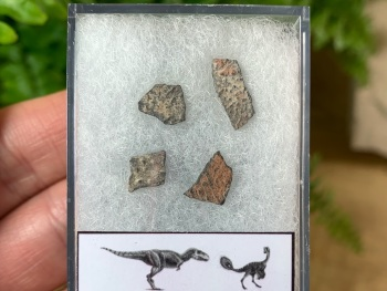 Theropod Dinosaur Eggshells (Nanxiong, China) #05