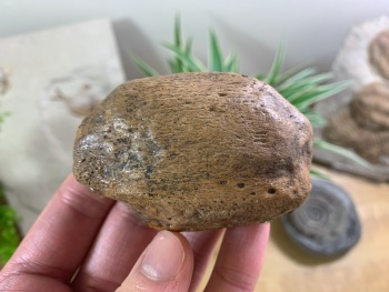 Cave Bear Knee Cap #02