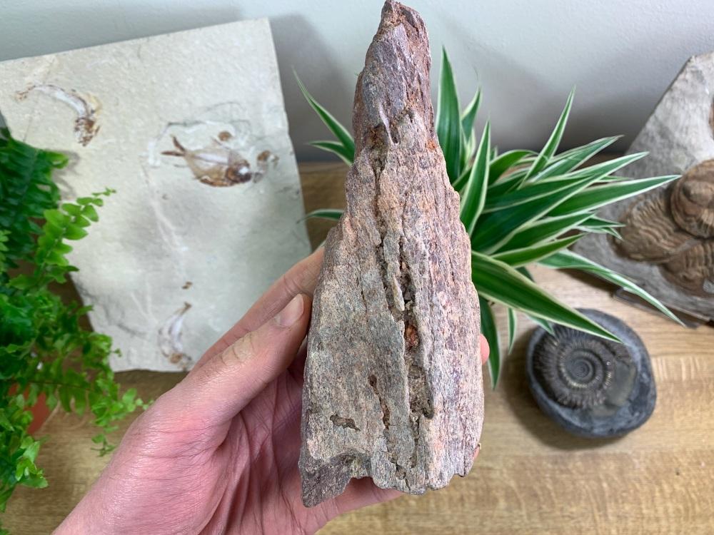 Dinosaur or Reptile Bone, Kem Kem #07