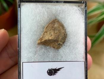 Unclassified NWA Meteorite #03