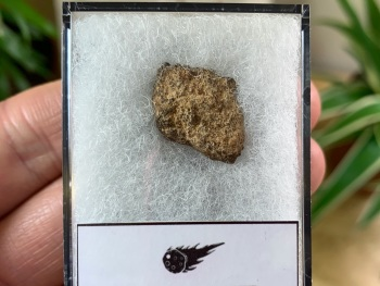 Unclassified NWA Meteorite #09