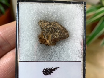 Unclassified NWA Meteorite #12