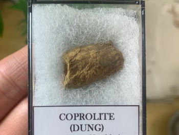 COPROLITE (DUNG), BULL CANYON FM. #02
