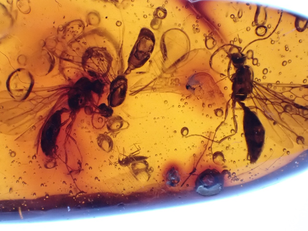 Dominican Amber Inclusion #09 (Winged Ants)