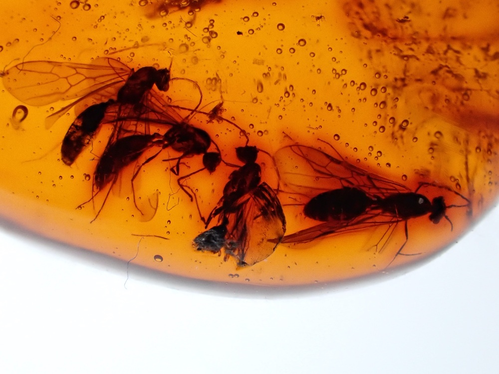 Dominican Amber Inclusion #15 (Winged Ants)
