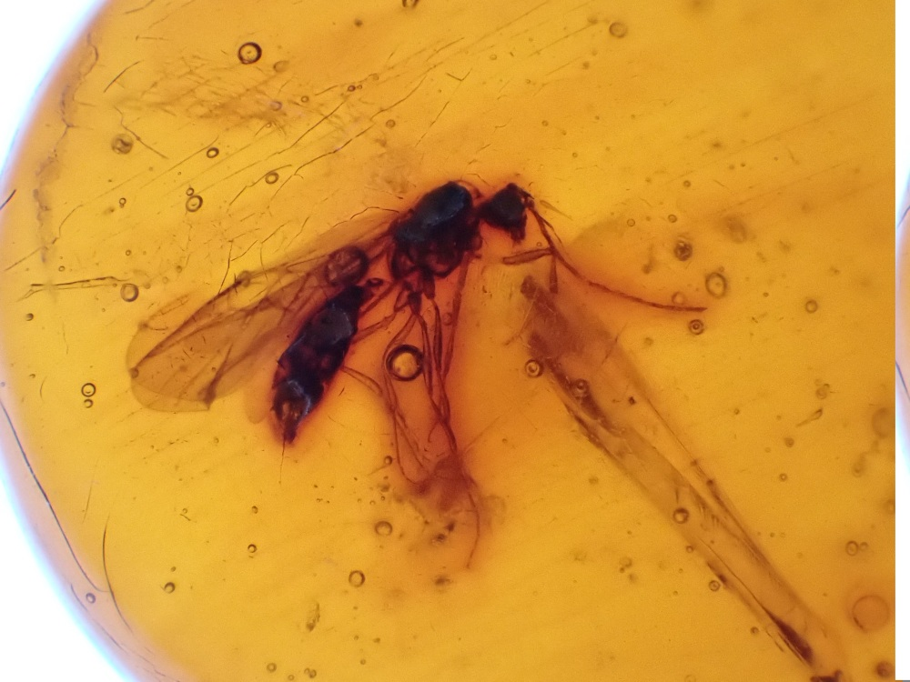 Dominican Amber Inclusion #16 (Winged Ant)