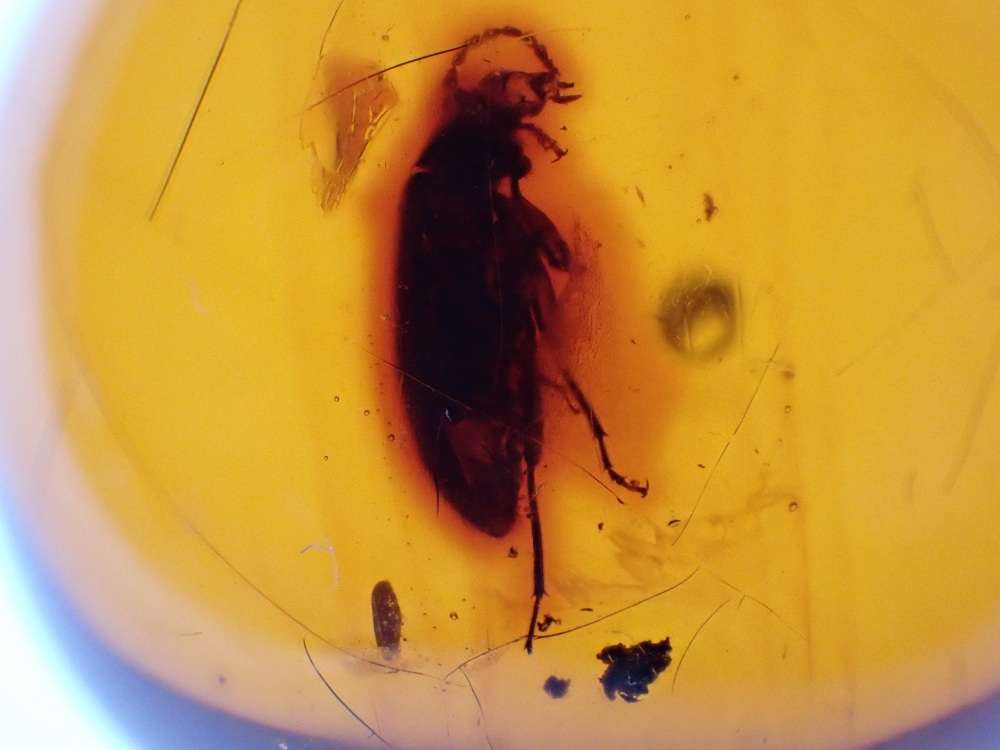 Dominican Amber Inclusion #25 (Beetle)